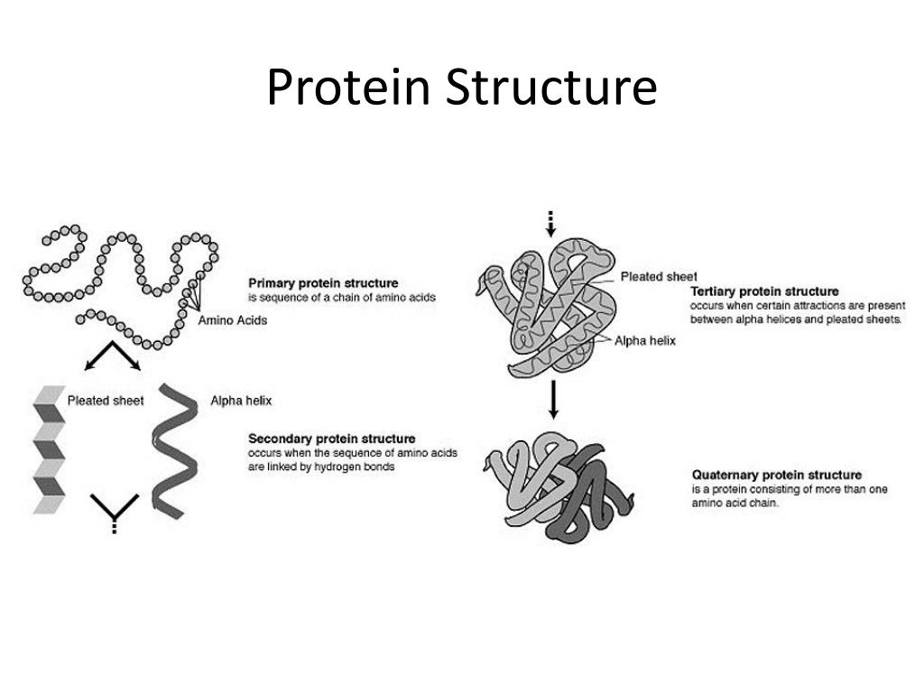 introduction to protein structure pdf free download